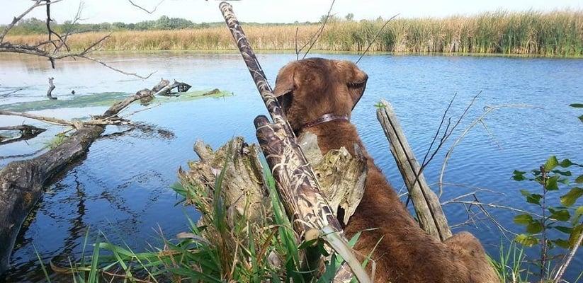 Hunting Dog Cropped